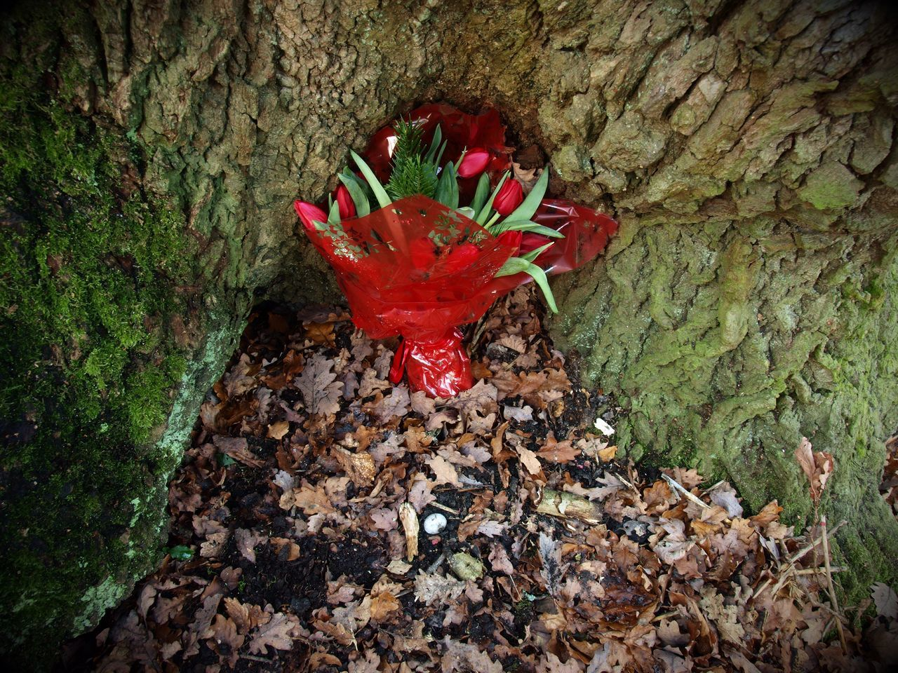 Special Place Hampstead Heath Olympus Steve Merrick Stevesevilempire Zuiko Tree Trunk