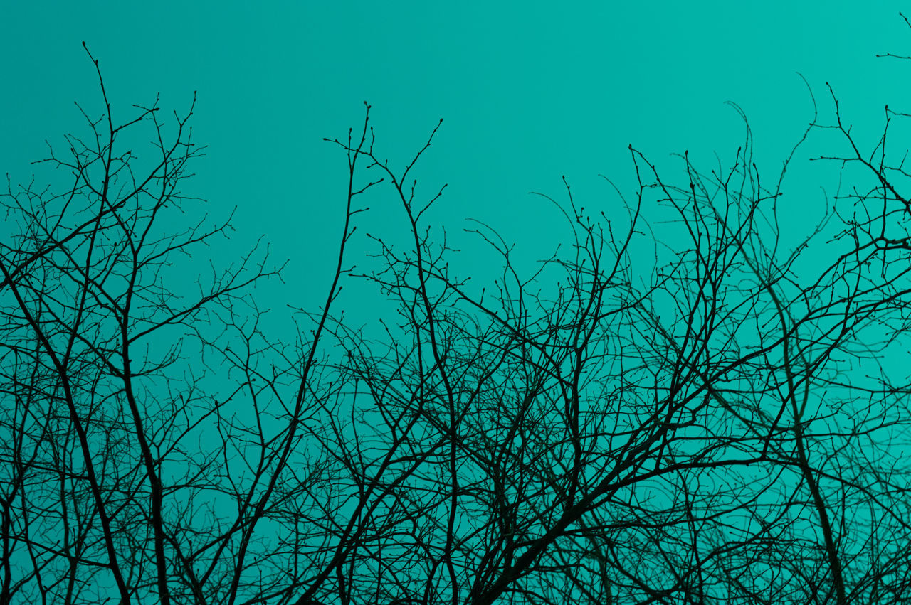 Tree Sky Low Angle View Nature Blue Tranquility No People Branch Outdoors Bare Tree Beauty In Nature Day