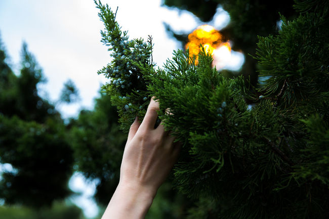 Glowing Silence Human Hand Nature Outdoors Personal Perspective Tree Zen Garden