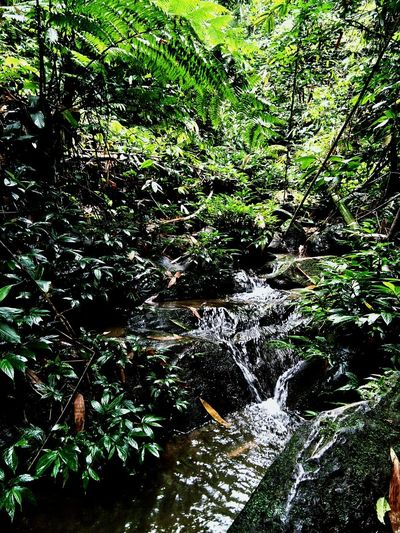 Stream Nature Growth Outdoors Green Color No People Day Water Plant Beauty In Nature Forest Freshness First Eyeem Photo