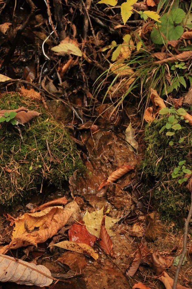 Functional Work Of Nature Functional Art Of The Forest Hi! Hello World Enjoying Life Landscape_photography EOS Eos70d Autumn Leaves Autumn