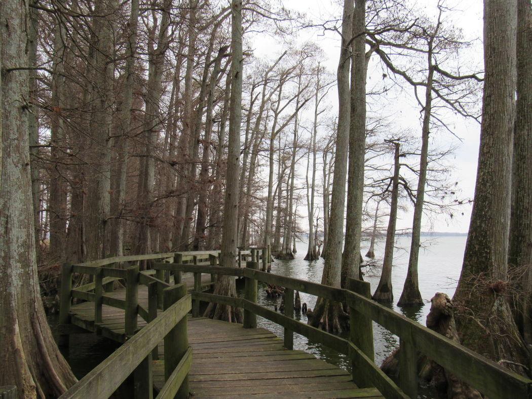 Tree Wood - Material Bridge - Man Made Structure Outdoors Water No People Nature Footbridge EyeEm Selects