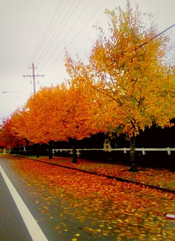 Isnt Nature Grand? Autumn Change Vertical Nature Outdoors Road Leaf The Week On EyeEem Outdoors Photograpghy  EyeEm Photo Of The Day Tranquility Vibrant Color Essence Of Fall Capturing Motion October Afternoon Fall Colors Small Town America Cold Temperature Harvest Time Cloud - Sky Growth Low Angle View Scenics Beauty In Nature
