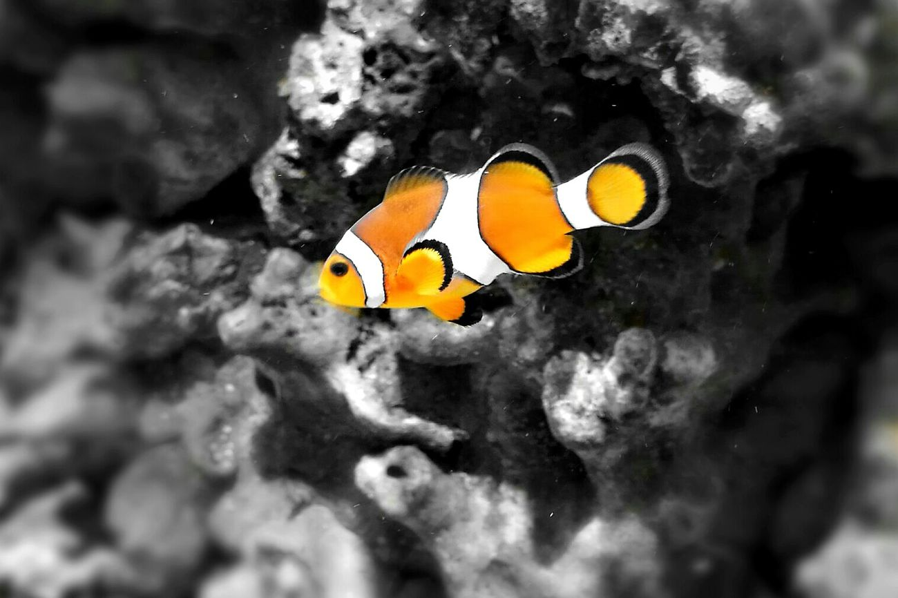 Fish Underwater Sea Life Water Oceanographic Valencia, Spain Nature Colors Holiday♡ Animal Wildlife UnderSea