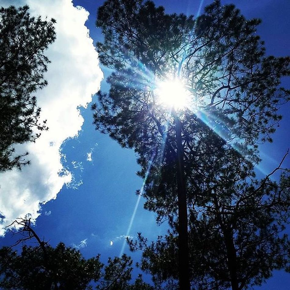Seeing thru the needles. Pine Pinetrees Sun Clouds Sky Sunrays Pineneedles Ignation Igersmanila IGDaily Igers Piñas  Byahenitin2016 Followstagram Tweegram Nature Megusta Melikey Wrightpark Baguio Baguiocity Instaplaces Piñas  Turista