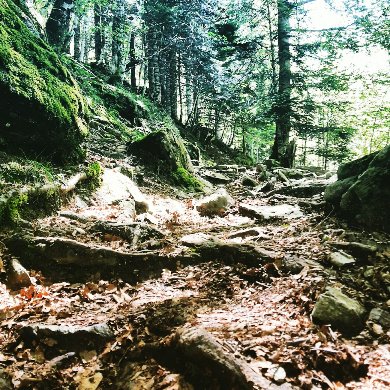 Landscape_Collection Landscapes Landscape Midi-Pyrenees Pyrenees Montagne Haute Garonne Forest