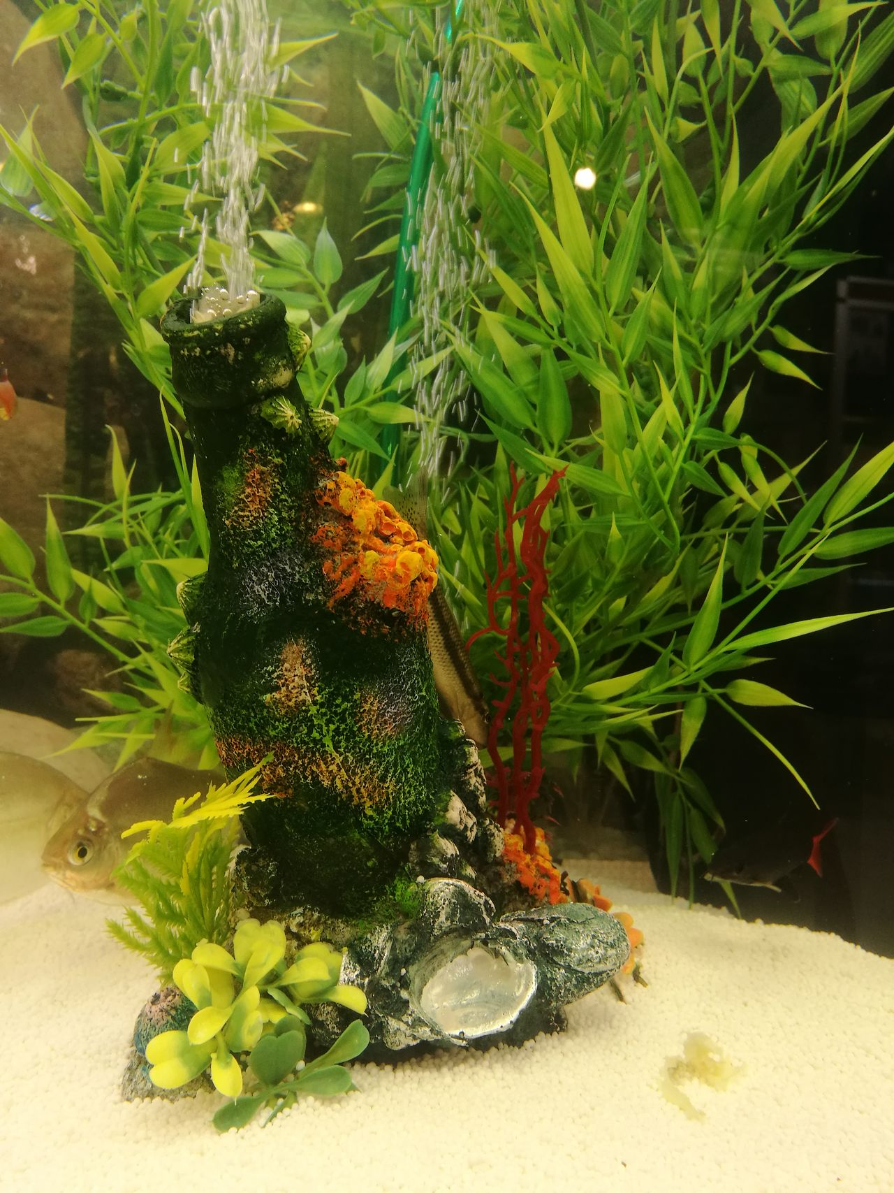 Growth Nature No People Plant Beauty In Nature Green Color Flower Freshness Fragility Close-up Leaf Indoors  Day Flower Head Fish Fishtank Fish Tank Decoration Tranquility