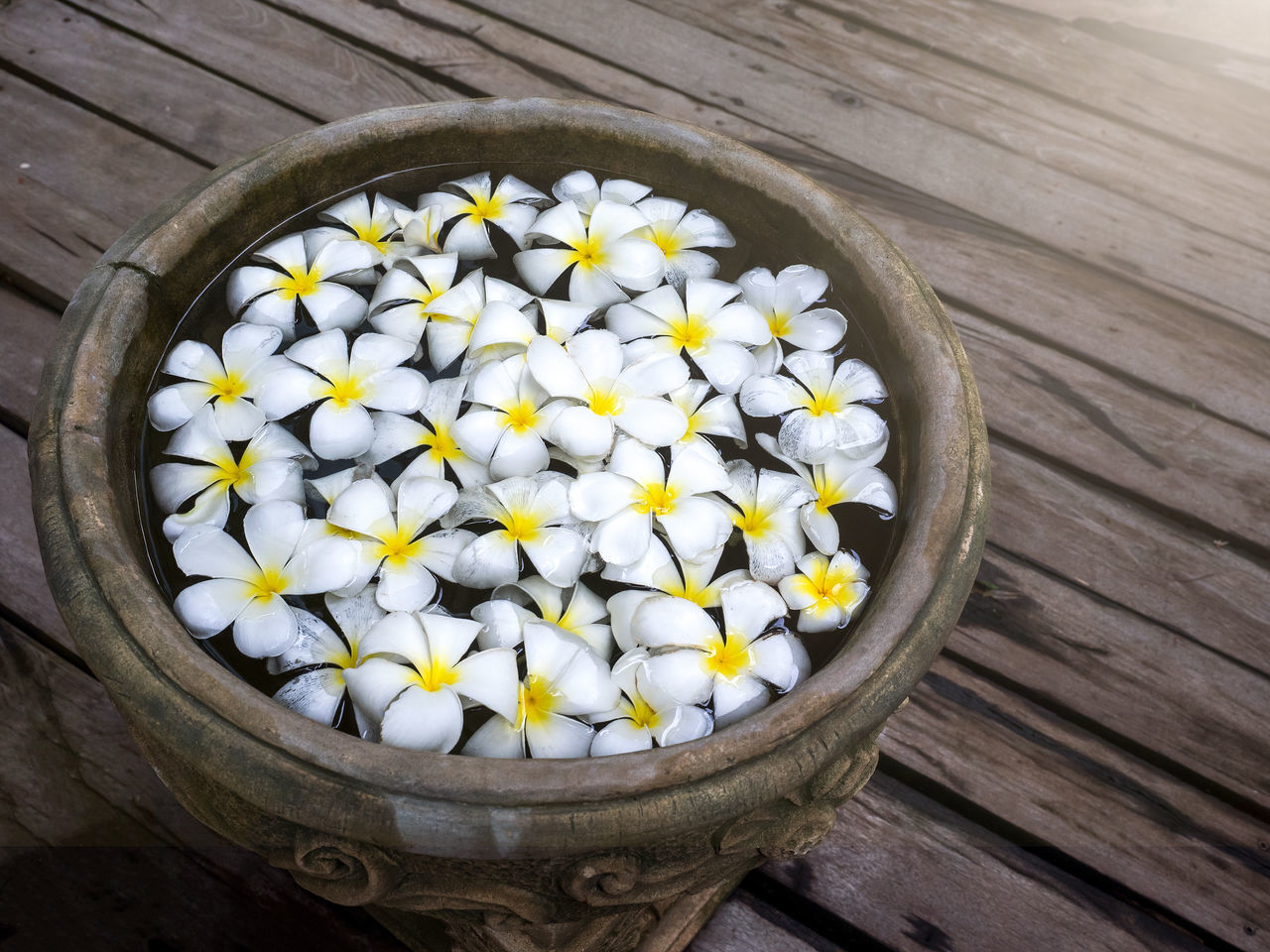 Close up view of spa theme and Frangipani plumeria Spa Flower in retro jar. Aroma Beautiful Close-up Concept Decoration Flower Freshness Freshness Healthy Interior Lifestyles Massage Medicine Natural Nature Relaxing Thai Therapy Topical Treatment Wellness White Color Women Wood Worms