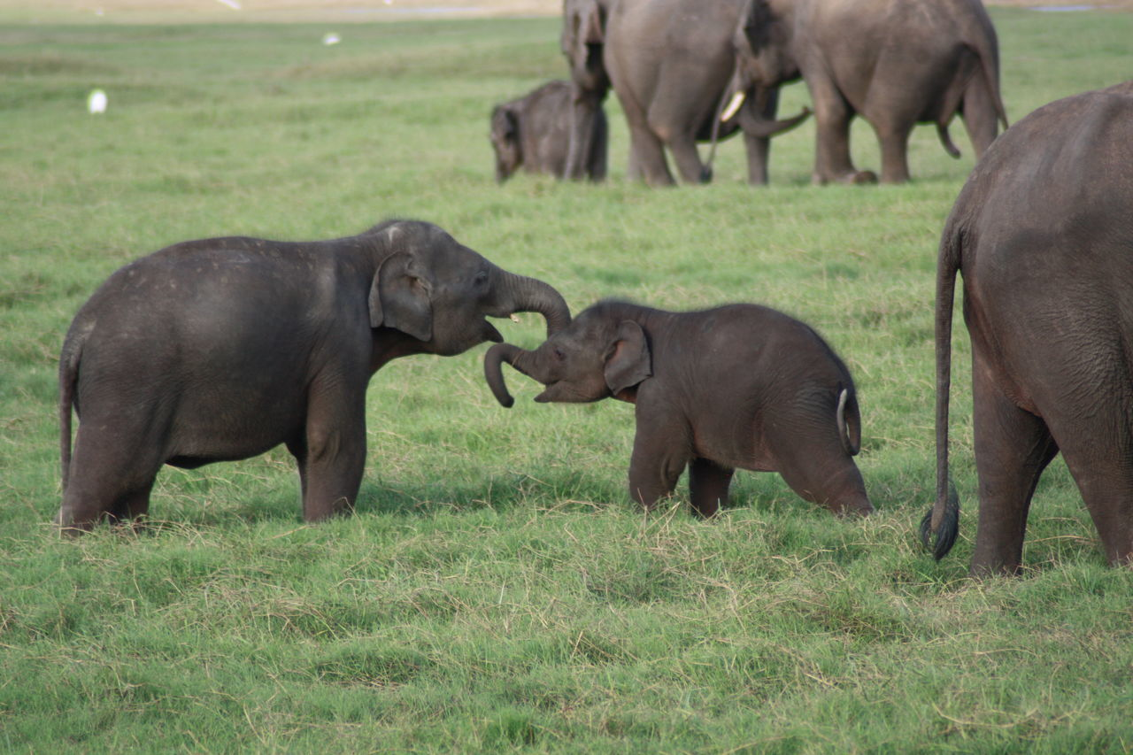Animal Animal Behavior Animal Themes Baby Elephant Elephant Elephants Playing Young Elephant Young Elephant Family At Water Hole Zoology