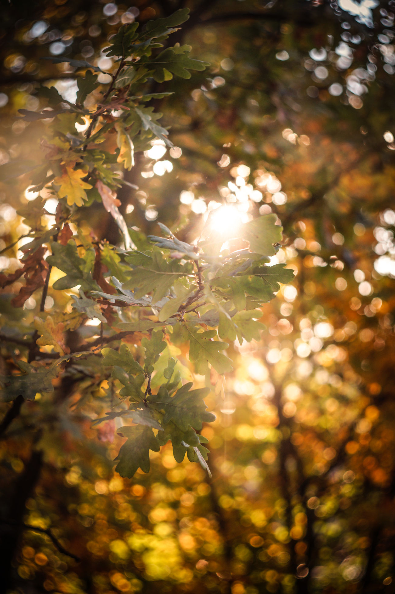 A view from my kitchen. Tree Leaf Branch Lens Flare Sunlight Selective Focus Sun Close-up Leaves Nature Beauty In Nature Focus On Foreground Landscape Landscape_photography Belarus Minsk Landscspe No People Beauty In Nature New Talent This Week Nature Tree Sunny Outdoors