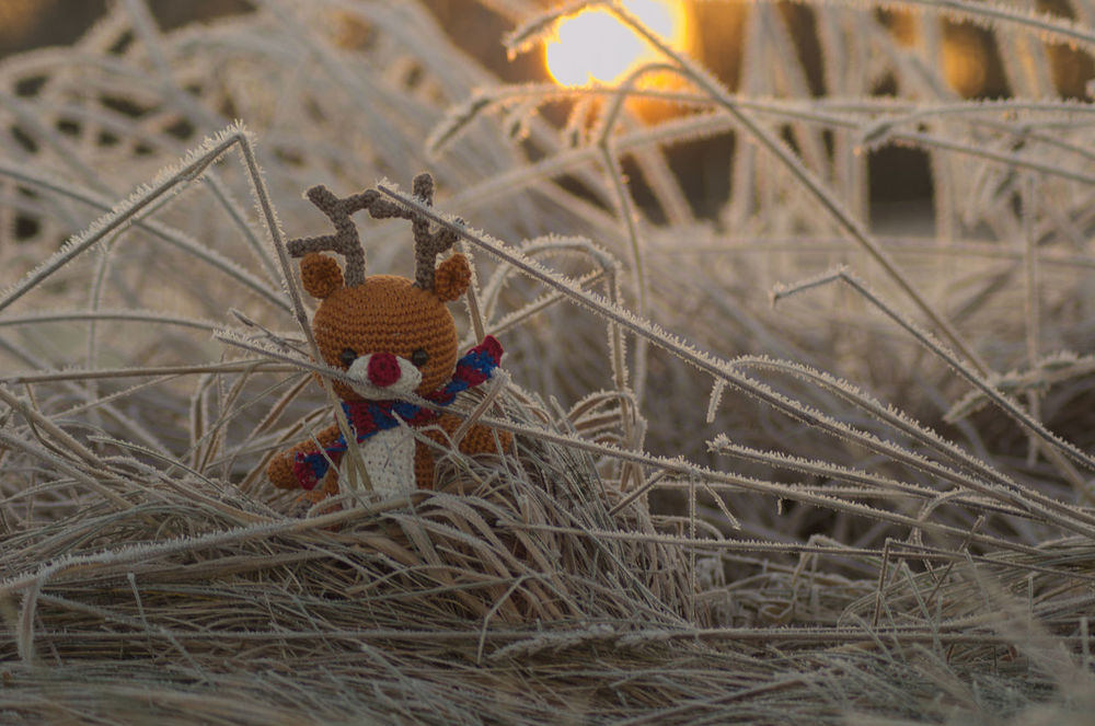No People Nature Outdoors Day Sunrise Sonnenaufgang Rudolf Reindeer Product Product Photography Produkt Rentier Frost Warme Farben Winter Sun Sonne Gehäkelt