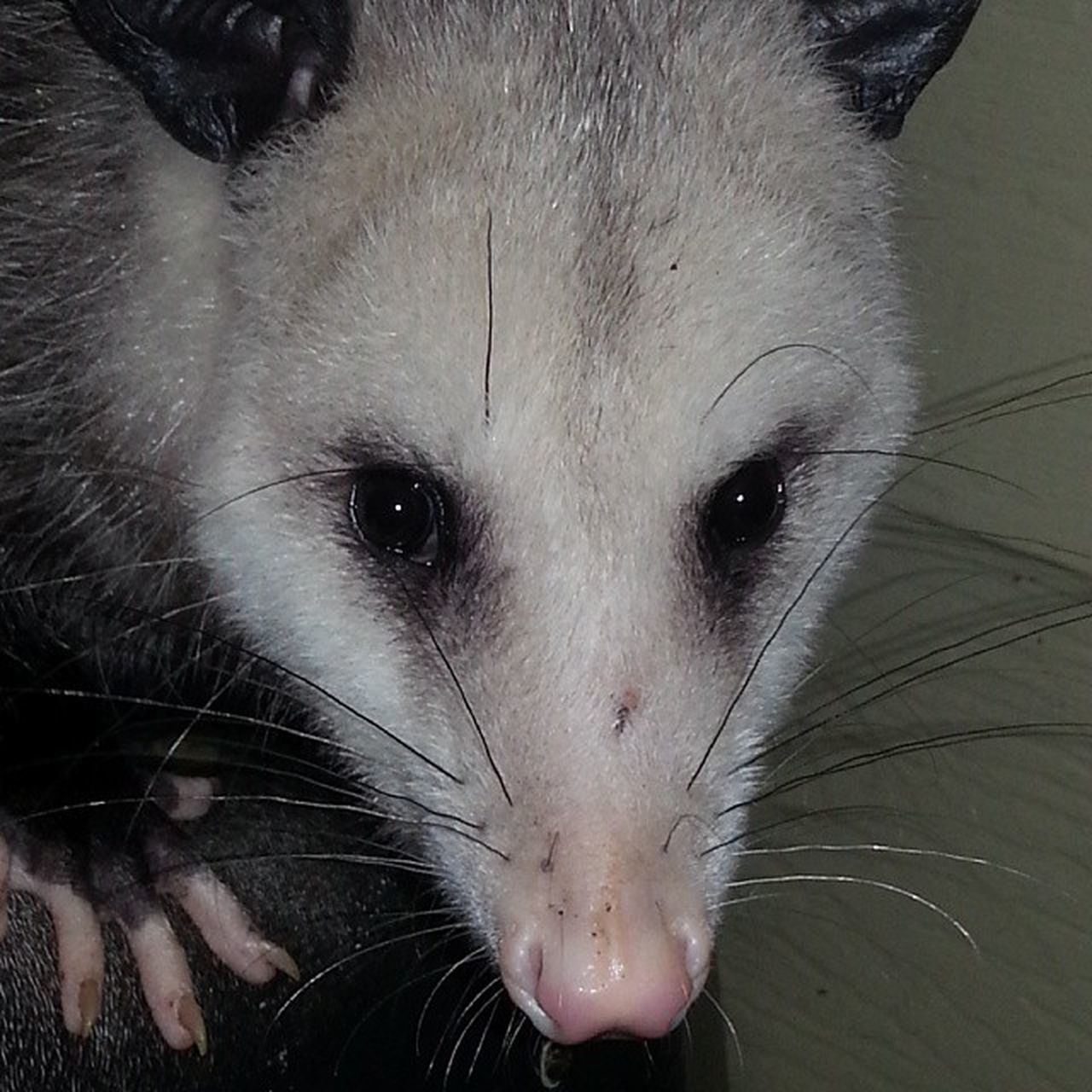 PossumsOfInstagram