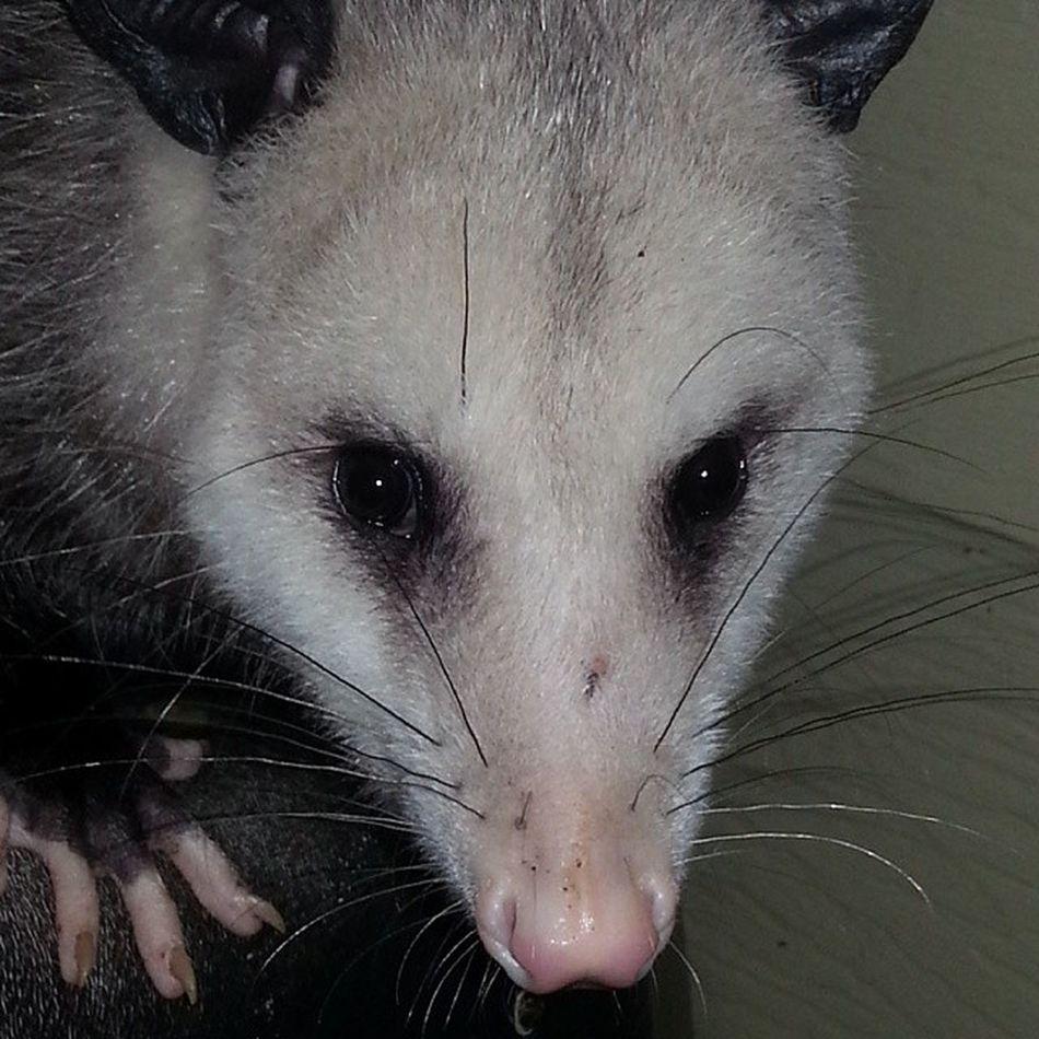 PossumsOfInstagram
