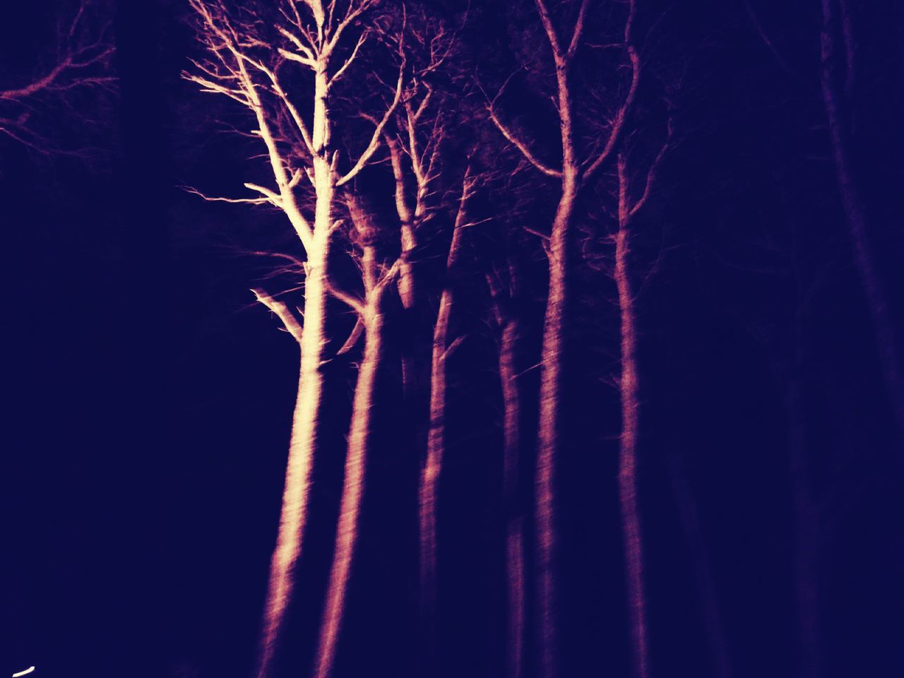 night, low angle view, no people, outdoors, nature, bare tree, illuminated, tree, sky, beauty in nature