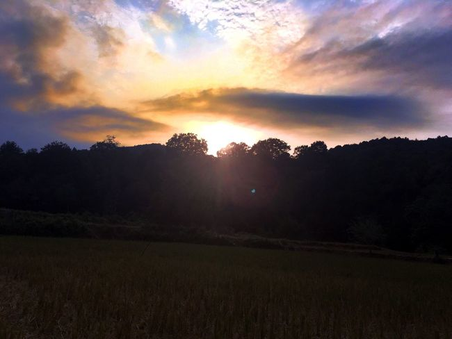 Sunset Tranquil Scene Scenics Tranquility Beauty In Nature Tree Sun Nature Sunbeam Sky Non-urban Scene Cloud - Sky Field Growth Majestic Rural Scene Outdoors Dark Back Lit Atmospheric Mood Darkness And Light Clouds Dramatic Sky Cloudscape Sunlight