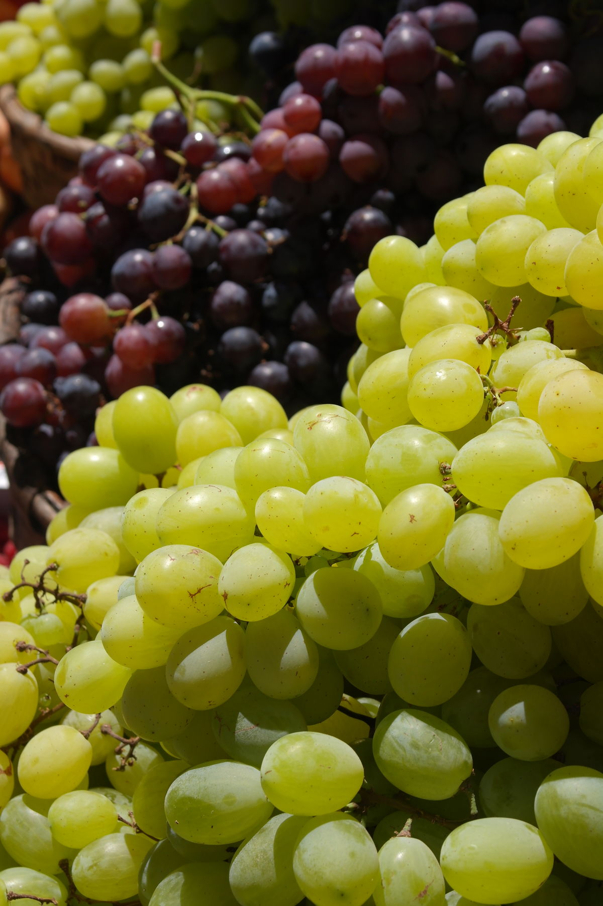 Abundance Backgrounds Bunch Close-up Day Focus On Foreground Food Freshness Fruit Fruit Of The Vine Full Frame Grape Green Color Growth Healthy Eating Large Group Of Objects Local Produce Nature No People Organic Outdoors Ripe Selective Focus The Shop Around The Corner