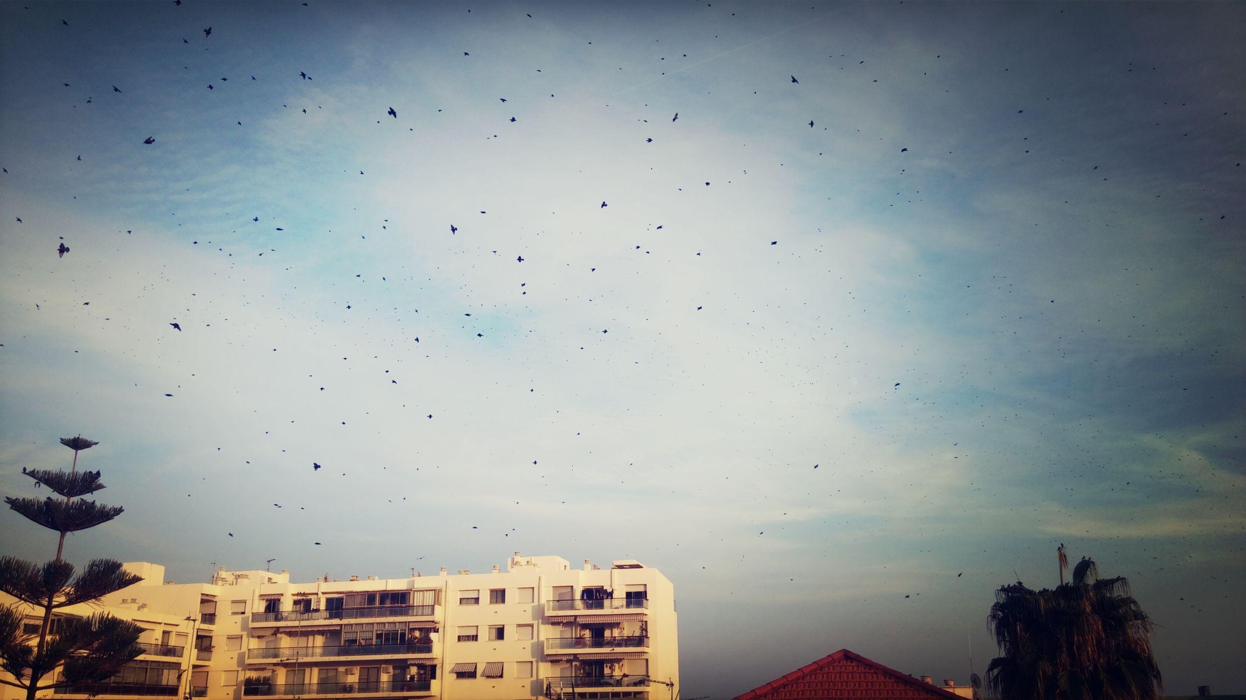 Ils sont vont jusque le printemps Nice Oiseux Autumn