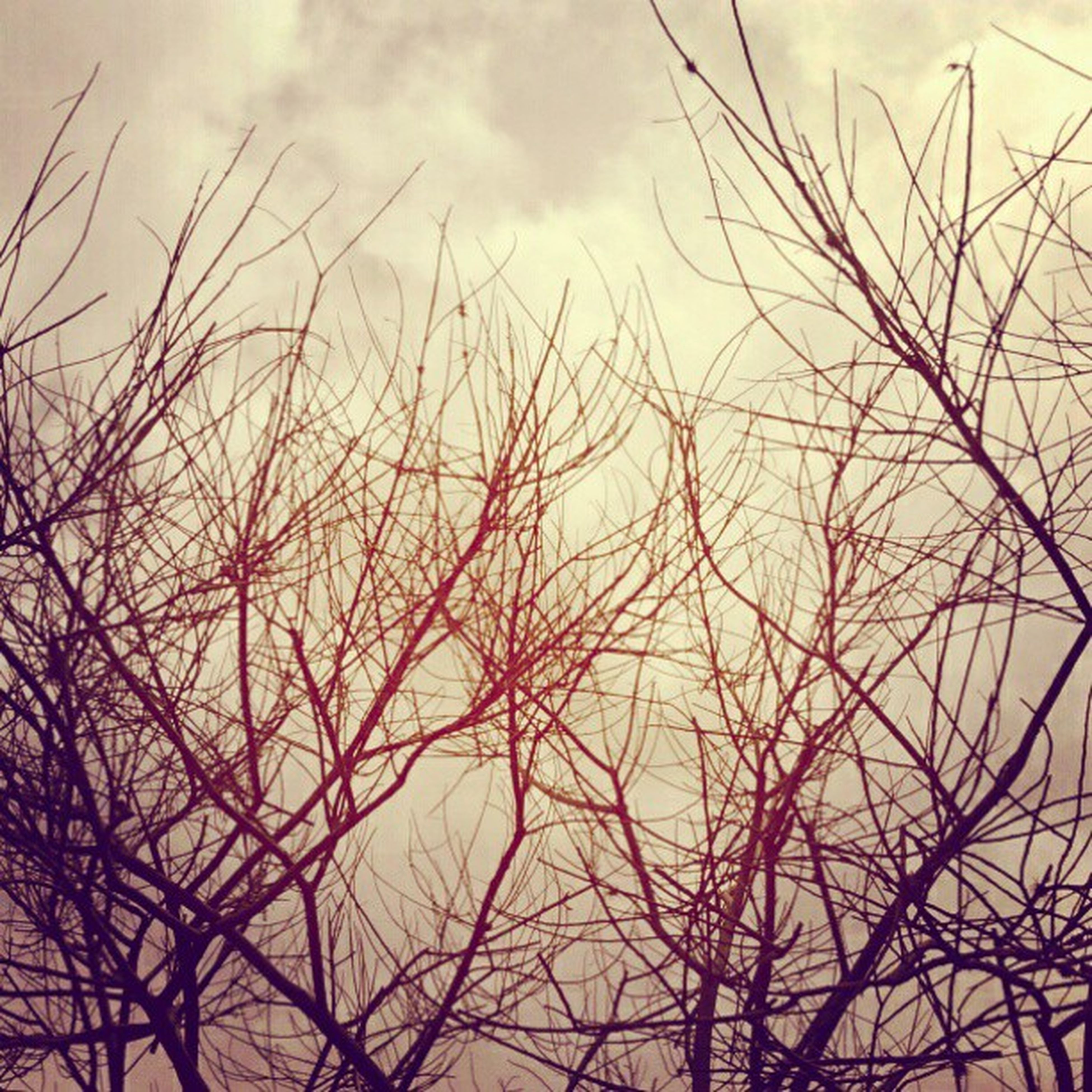 bare tree, branch, low angle view, sky, tree, cloud - sky, tranquility, silhouette, nature, beauty in nature, scenics, cloudy, tranquil scene, dusk, outdoors, sunset, cloud, no people, weather, overcast