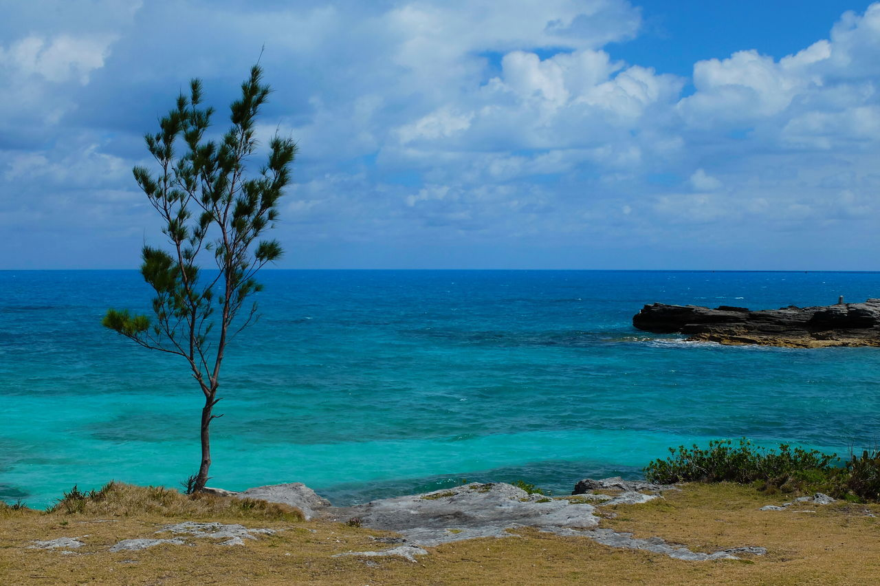 colorful waters Beauty In Nature Bermuda Blue Cloud - Sky Day Horizon Over Water Nature No People Outdoors Scenics Sea Sky Tranquil Scene Tranquility Tree Water