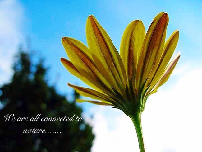 Spiritual Awakening Quotes Nature Photography Eyem Nature Lover Flower Hello World Macro_flower My Photography