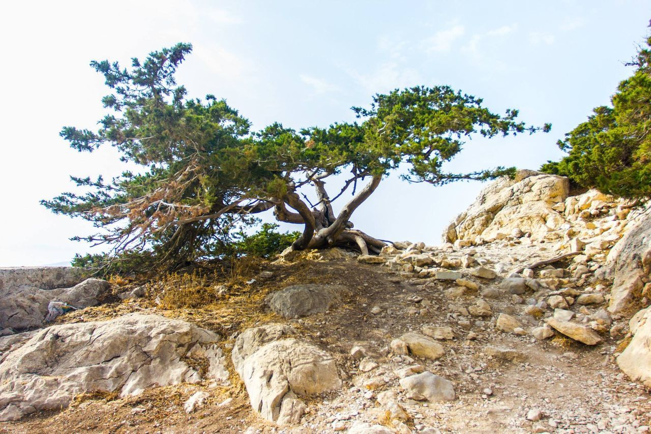 tree, nature, rock - object, sky, landscape, day, no people, tranquility, beauty in nature, outdoors, scenics, growth
