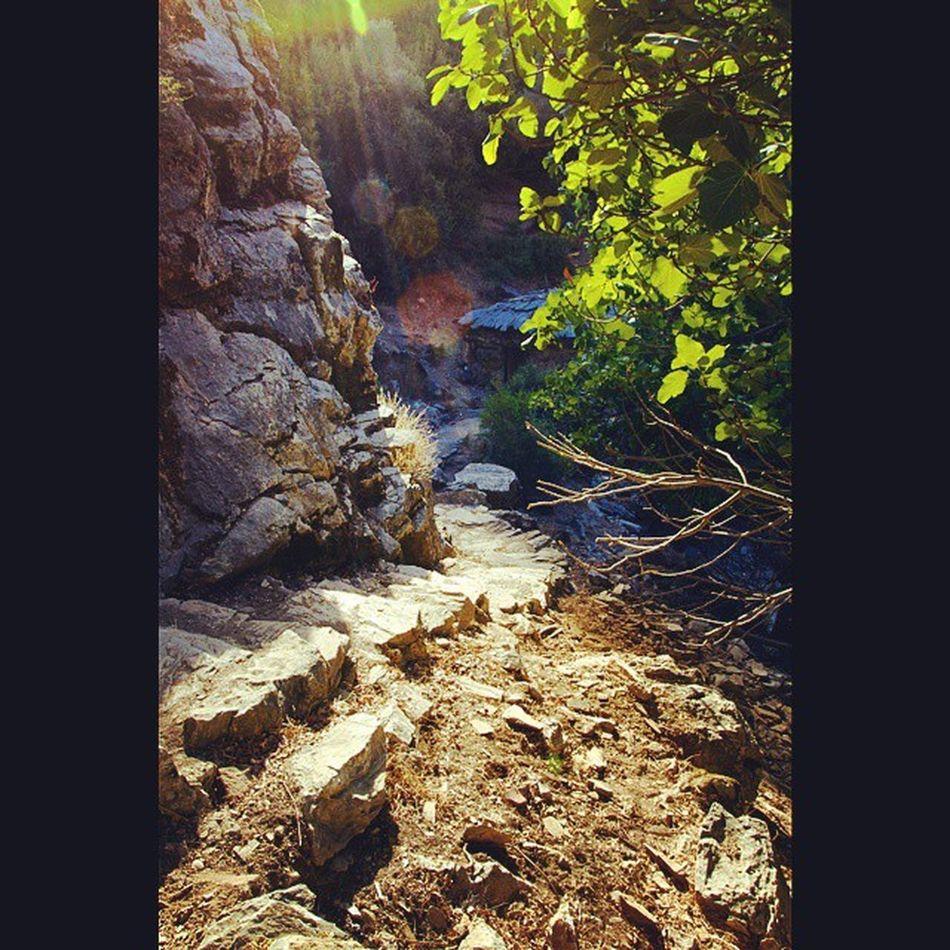 Nature Beauty Photo Instagrammers Igers Tagsforlikes Instagood Follow Comment ShoutOut Android Instagood Exposure Composition Focus Capture Mountain Autumn Tree Green Naturelovers Landscape Turkey Milas Uykuvadisi