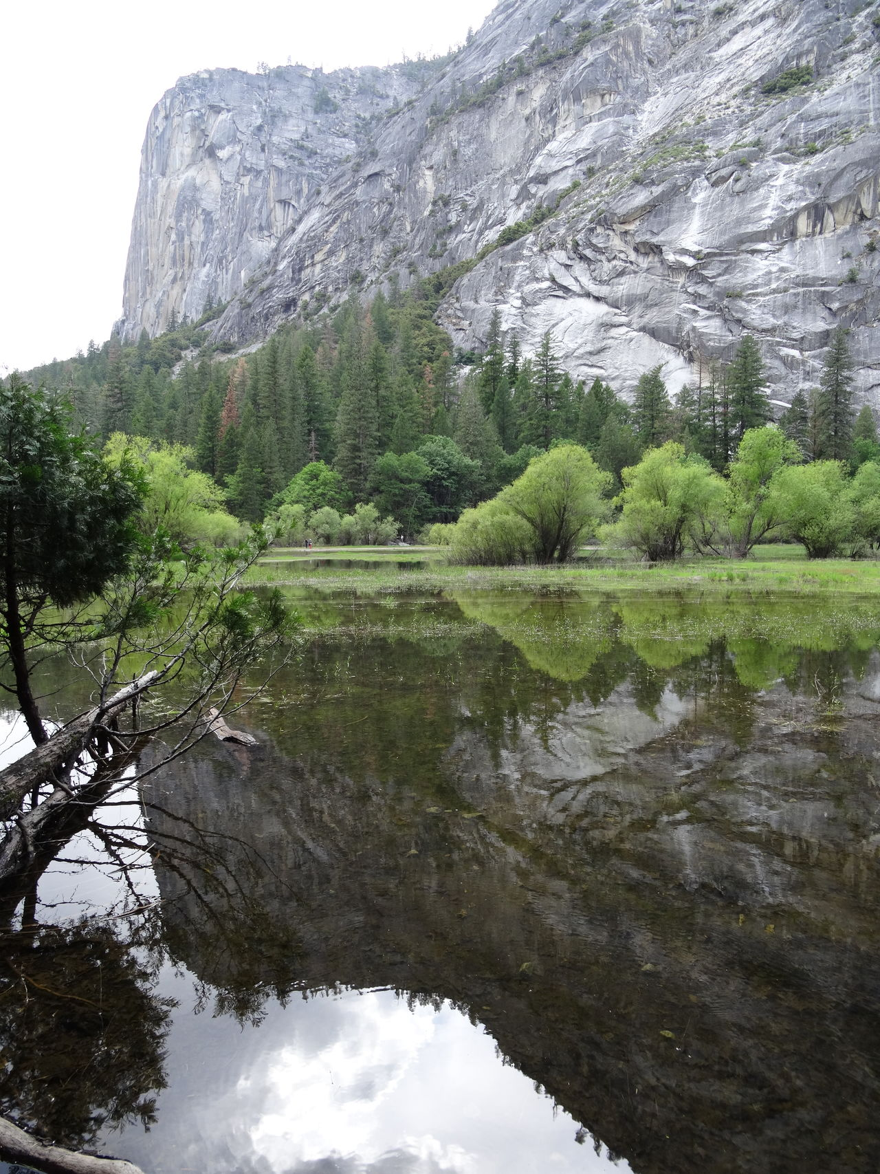 Beauty In Nature Day Forest Green Color Growth Lake Mirror Lake Mountain Nature No People Outdoors Reflection Scenics Sky Tranquility Tree Trees USA Water Water Reflections Yosemite Yosemite National Park