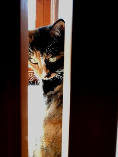 Cute Lovely Cat Lover Cat Cat Lovers Sunlight Calico Cat One Animal Animal Themes Pets Domestic Animals Mammal Domestic Cat Indoors  Looking Through Window Home Interior No People Feline Day Close-up