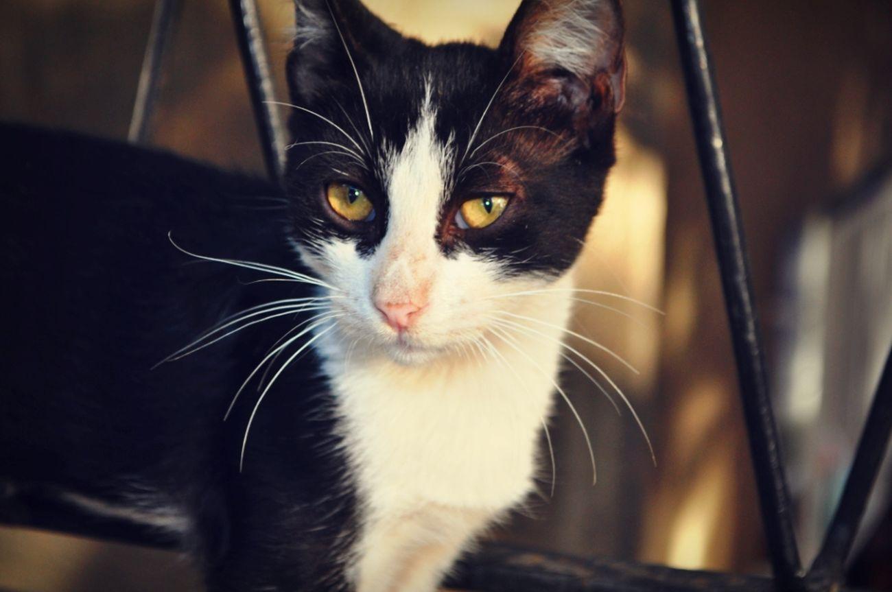 Cat Lovers Cat Streetcats Blacknwhite_perfection Cute Kedi Siyahbeyaz Sokakkedisi Beautifulanimal