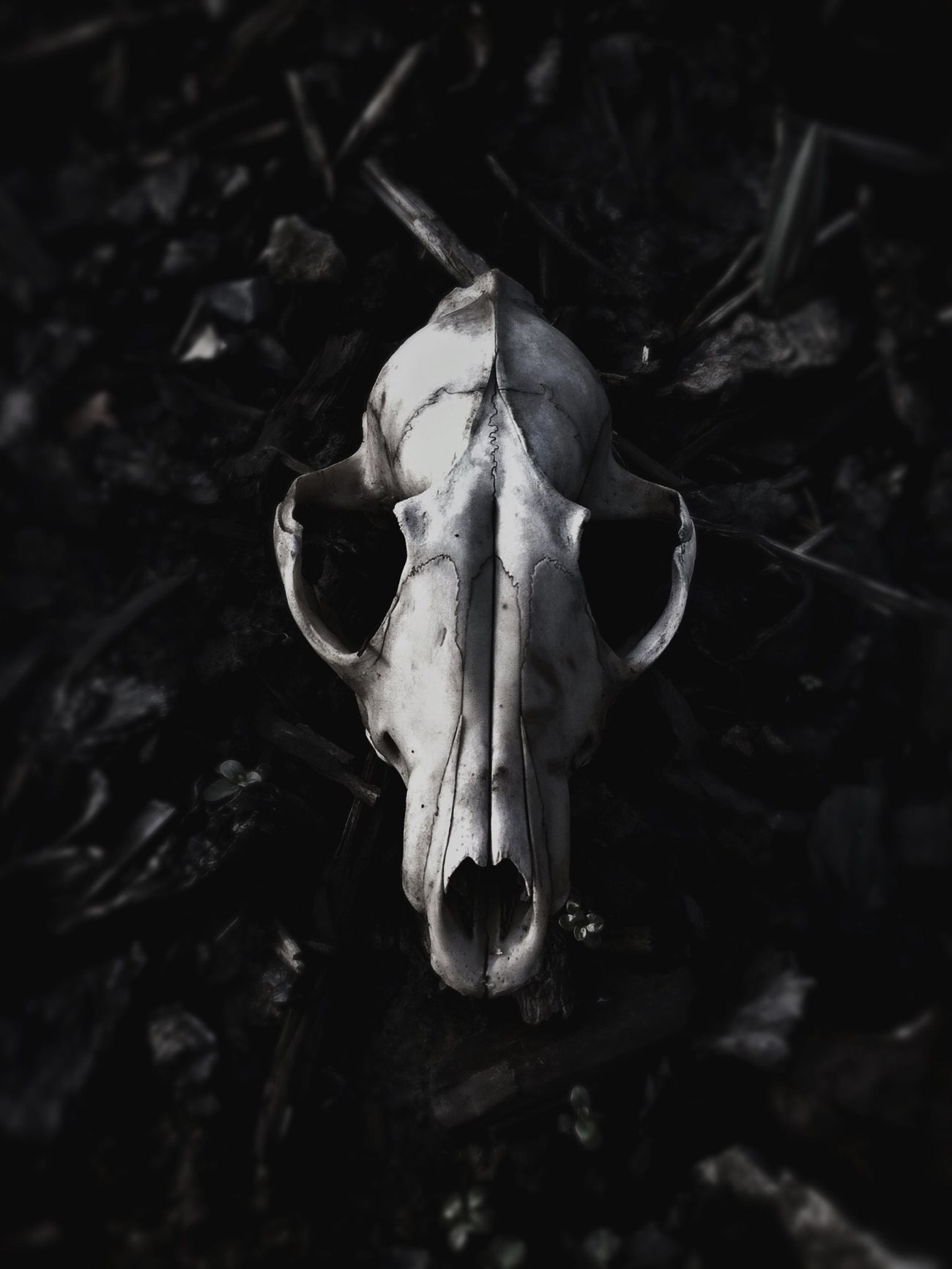 Beautiful stock photos of skull, Abandoned, Animal Body Part, Animal Skull, Close-Up