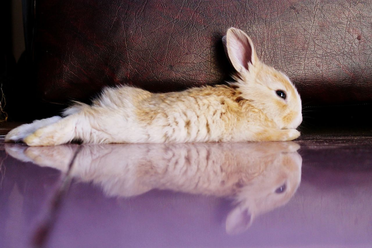 Beautiful stock photos of easter bunny, Animal Head, Animal Themes, Close-Up, Domestic Animals
