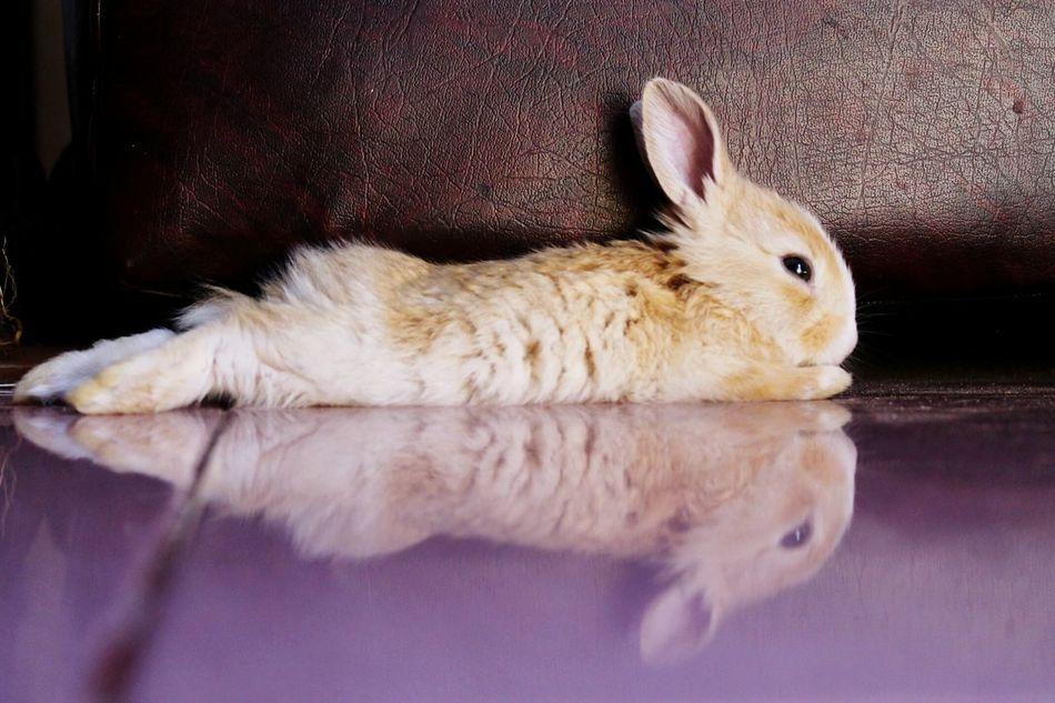 Beautiful stock photos of easter bunny, Animal Head, Animal Themes, Close-Up, Domestic Animals