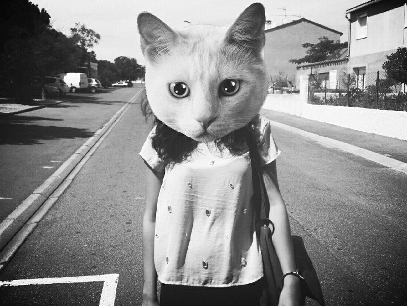 Catwoman CATWANG Miaouuuu ♡