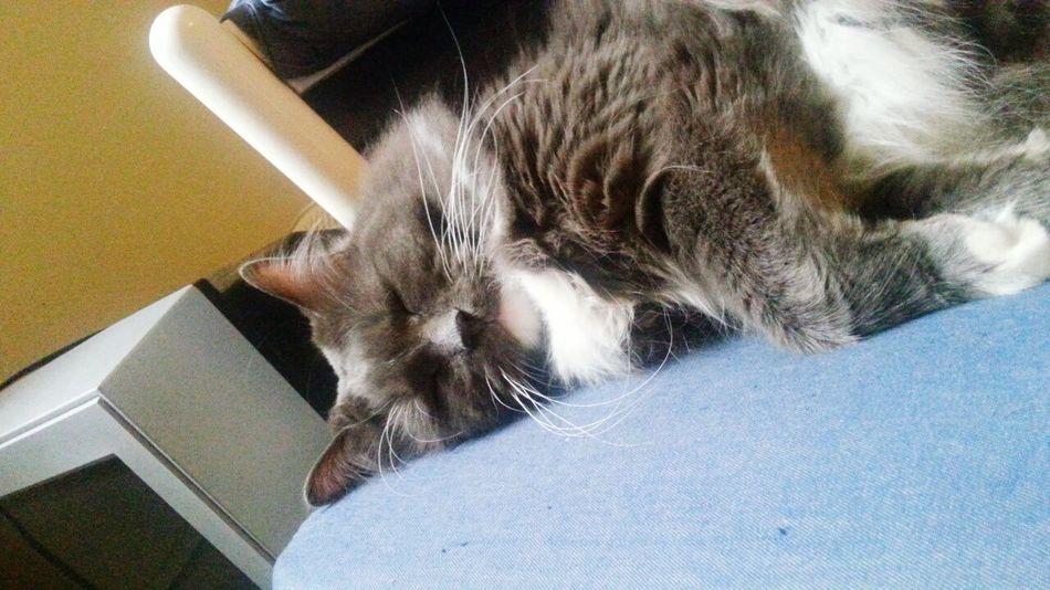 Sleepy Hi! Taking Photos Pets Kittens Cool Cat - Meow Meow🐱 Cat♡ Catsweek Cute Pets
