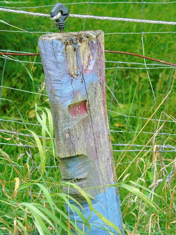 Close-up Day Detail Deterioration Feel Good Focus On Foreground Grass Green Color Hello World Hidden I Like It Keep On Smiling Nature No People Outdoors Rural Scene Summer Feeling Tranquility