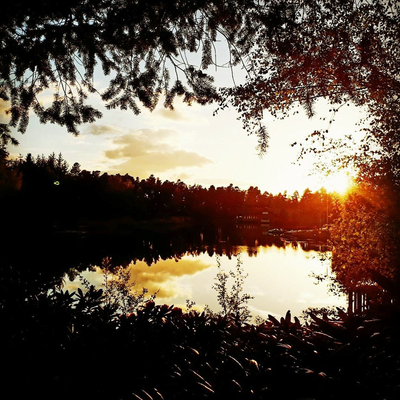 Centre Parcs Whinfell Forest Reflection Water Tree Lake Silhouette Sunset Nature Tranquility Outdoors Beauty In Nature No People Love To Take Photos ❤