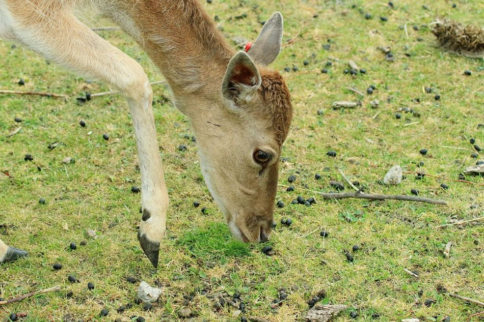 Beautiful stock photos of deer, Animal Themes, Animals In The Wild, Beauty In Nature, Berlin