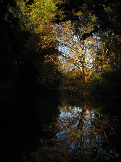 Autumn Beauty In Nature Day Forest Growth Lake Nature No People Outdoors Pond Pool Reflection Scenics Tranquil Scene Tranquility Tree Water