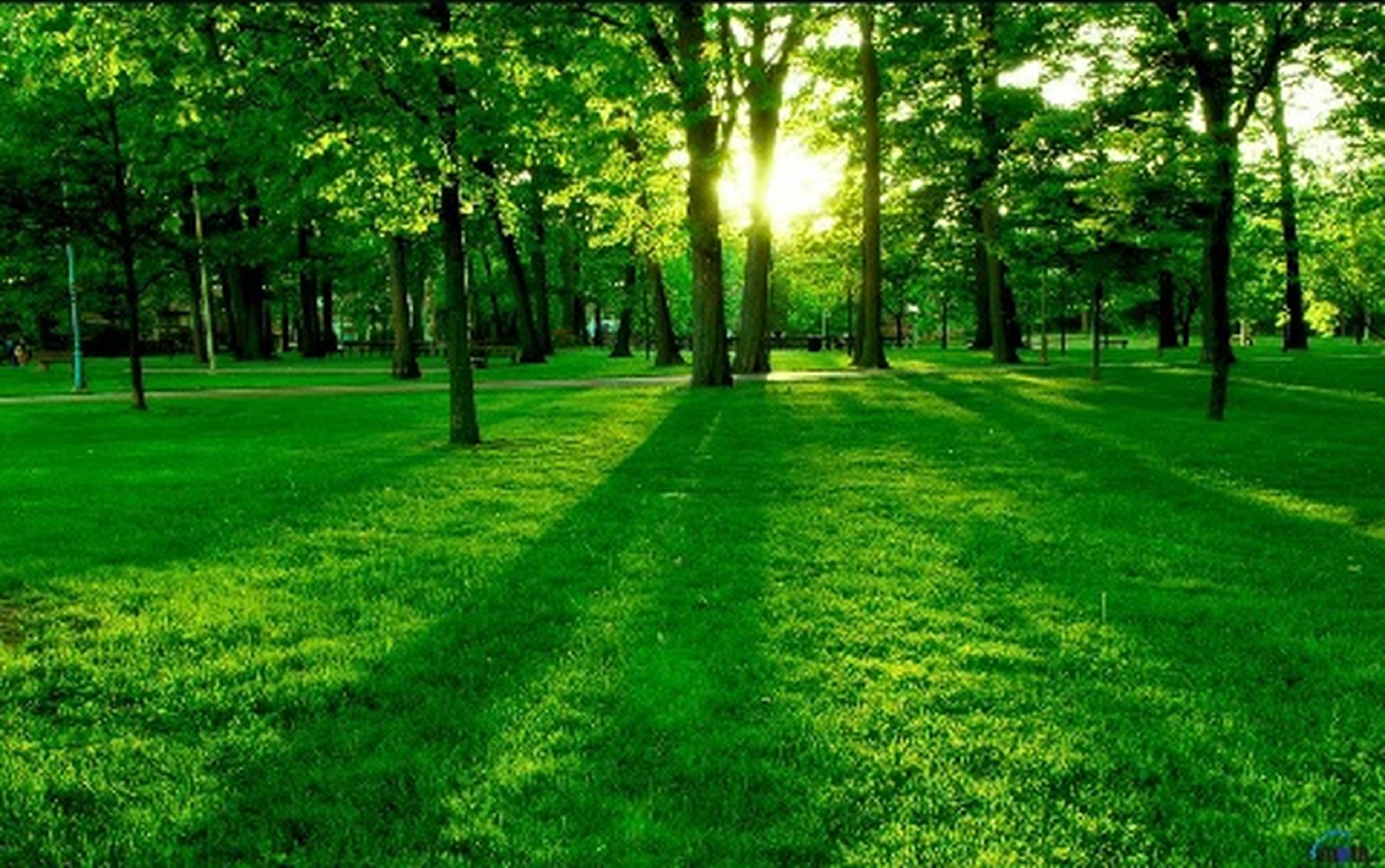 tree, grass, green color, growth, sunlight, tranquility, grassy, park - man made space, nature, tranquil scene, tree trunk, beauty in nature, shadow, field, lawn, park, scenics, landscape, day, grassland