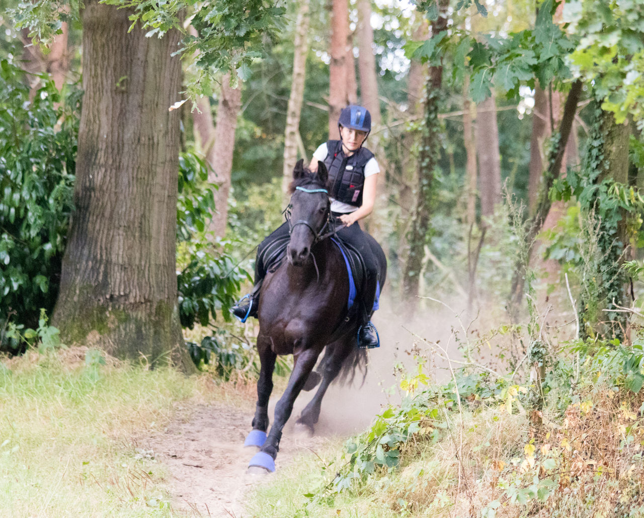 Jockey Riding Horse Against Trees In Forest During Training