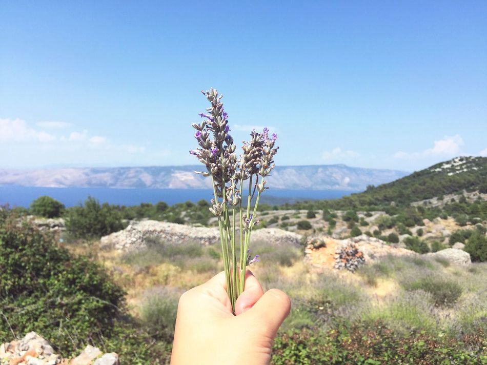 The Journey Is The Destination Scooting around the island and raiding lavender farms On The Way On The Road Lavender Hvar Croatia Nature