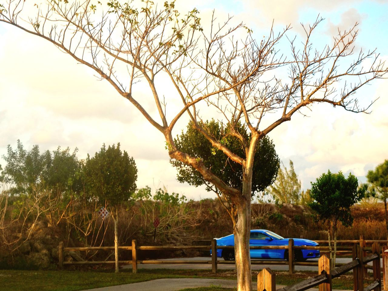 Tree Nature Sky Growth Beauty In Nature No People Outdoors Day Scenics Branch