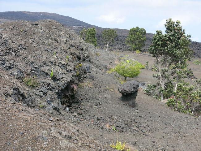 Day Hawaii Hawaii Volcano Trail Hawaii Volcanoes National Park Hilo  Hilo Hawaii Light Stone Nature No People Outdoors Rock Rock - Object