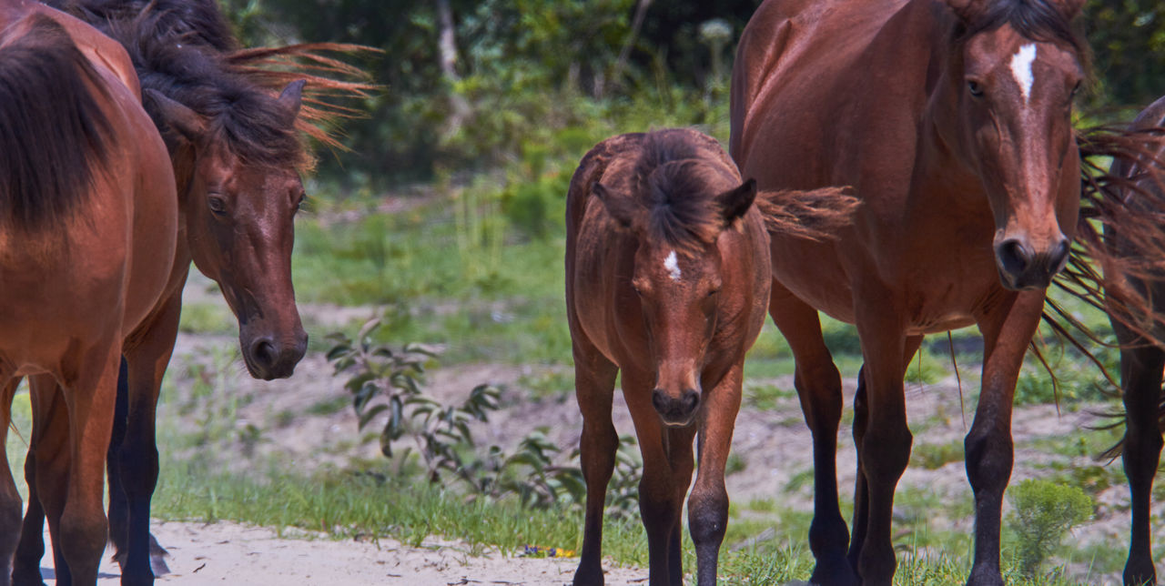 Animal Animal Themes Baby Horse Brown Day Friendship Herbivorous Horse Horse Family Mammal Togetherness Wild Horses