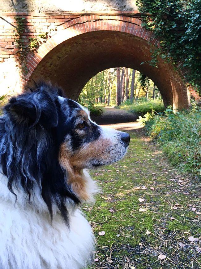 No People Open Edit EyeEm Best Shots EyeEm Nature Lover Dog Bridge Enjoying Life Enjoying The Sun Autumn