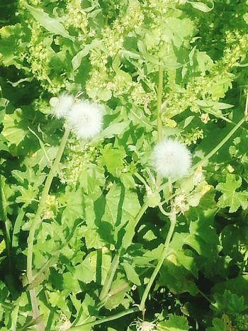 الطبيعة جميلة الورود First Eyeem Photo