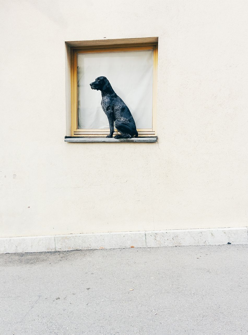 Beautiful stock photos of pets, Animal Themes, Architecture, Building Exterior, Day