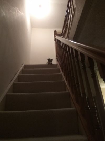Staircase Steps And Staircases Low Angle View Steps Indoors  No People One Animal Pets Dog Domestic Animals Animal Themes