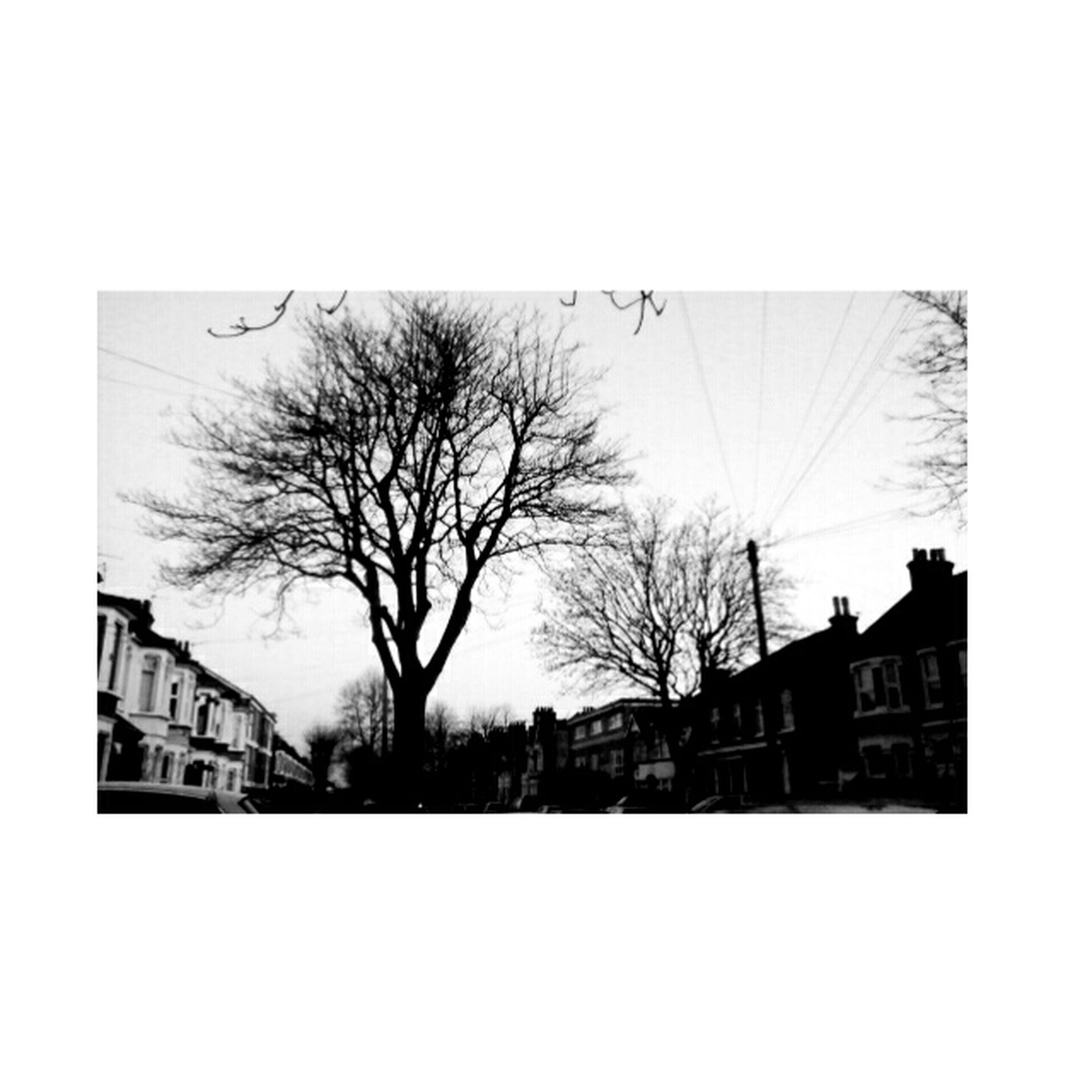 building exterior, transfer print, architecture, built structure, auto post production filter, bare tree, tree, silhouette, clear sky, house, sky, residential structure, residential building, city, building, day, outdoors, copy space, low angle view, no people