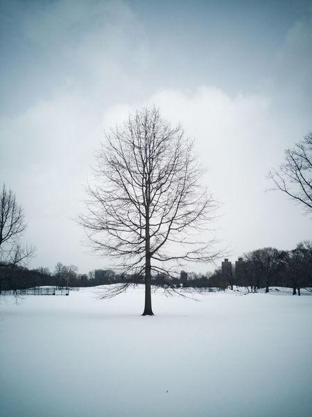 RahimNoel Rahim New York Vivid Manhattan Black & White First Eyeem Photo Best EyeEm Shot Beautiful Snow ❄ No People Calm Abstrax ❤ Tree Dark Love